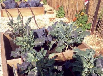 Organic Gardening at WBAIS Israel