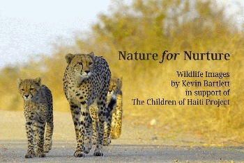 TIE Publishes Wildlife Photography Book